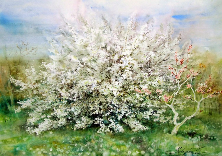 Blooming cherry. 2012 Watercolor. 54x76cm